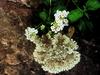 2008-09-13-162473-adrianoantoine-100