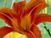 2009-11-07-1082968-adrianoantoine-100